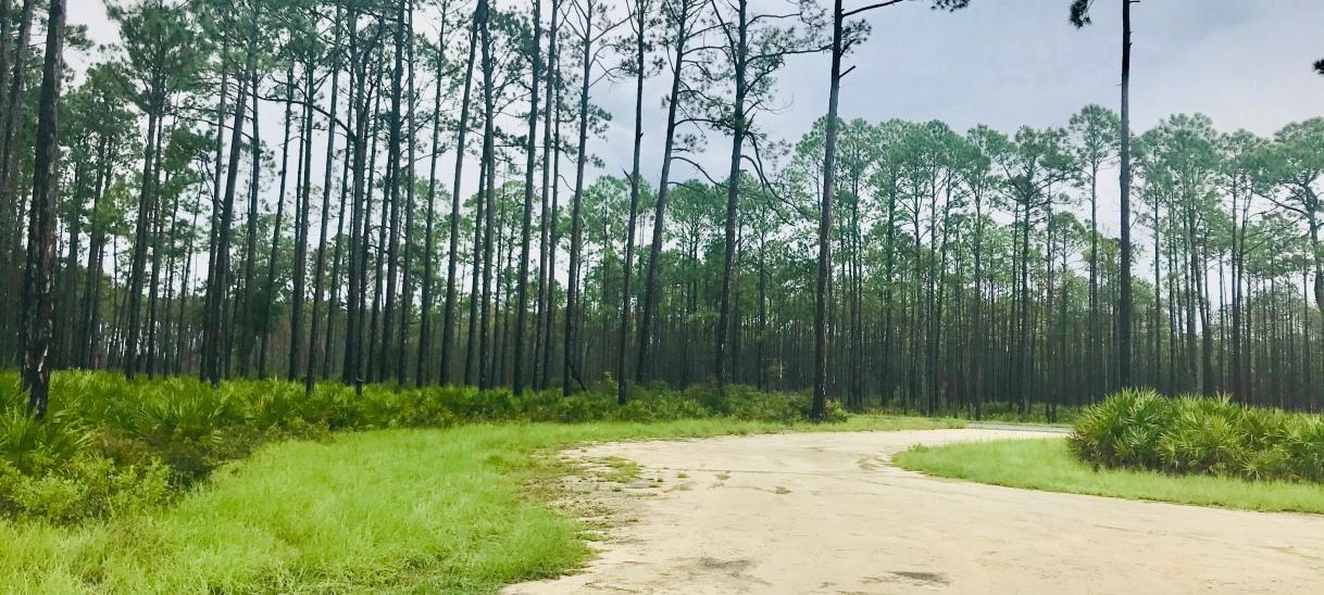 """Fort Gadsden: Forgotten """"Negro Fort"""" history hidden in Apalachicola NationalForest"""